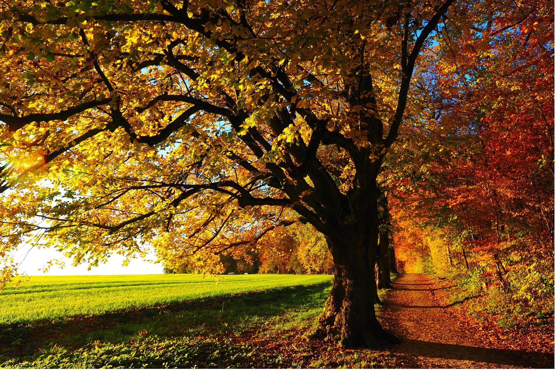 All aspects of tree work undertaken